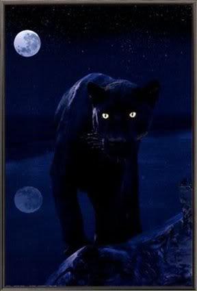 black panther astrology tara greene
