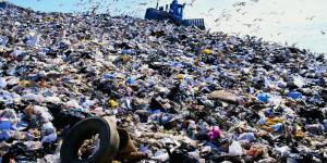 Gulls (Laridae) and earthmover on landfill